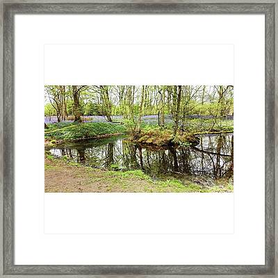 #reflection #water #bluebell Framed Print by Natalie Anne