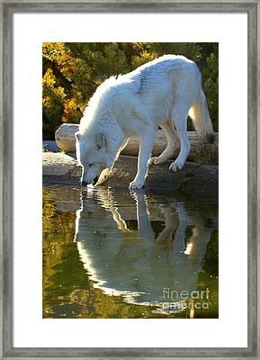 Reflections At The Pond Framed Print