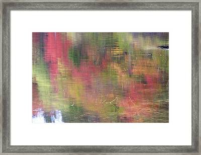 Reflections Framed Print by Catherine Alfidi