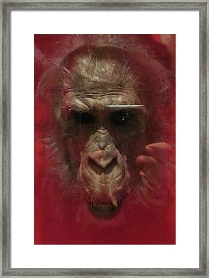 Reflections Framed Print by David Sutter