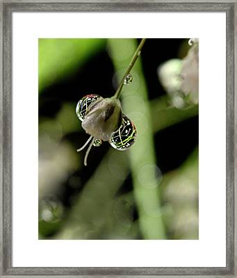 Reflections In Reflections  Water Drops On Baby's Breath Framed Print by Laura Mountainspring