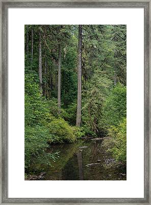 Reflections In Silver Falls State Park Framed Print by Greg Nyquist