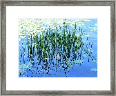 Reflections In The Bay Framed Print