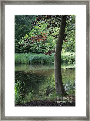 Reflections In The Water Framed Print