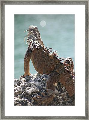 Reflections Framed Print by Lori Mellen-Pagliaro