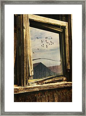 Reflections Framed Print by Nancy  Coelho