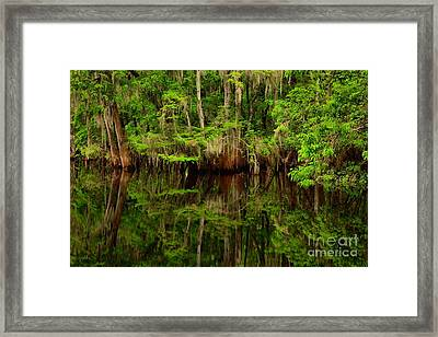 Reflections Near The Suwannee River Framed Print by Adam Jewell