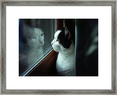 Reflections Of A Cat Framed Print