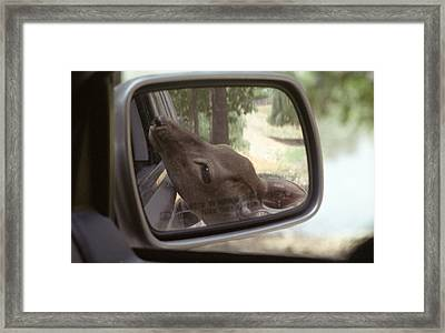 Framed Print featuring the photograph Reflections Of A Deer by Wanda Brandon