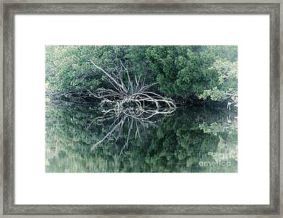 Reflections Of A Spider Tree Framed Print by Felix Lai