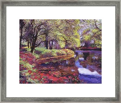 Reflections Of Azalea Blooms Framed Print by David Lloyd Glover