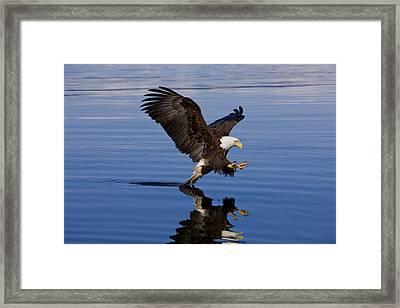 Reflections Of Eagle Framed Print