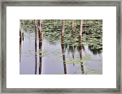 Reflections Of Franklin Parker Framed Print