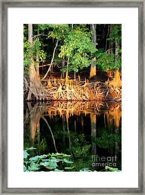 Reflections Of Our Roots Framed Print by Lora Wood