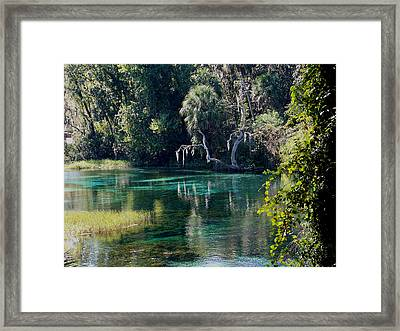 Reflections Of Rainbow Springs 2 Framed Print