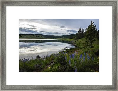 Dumont Lake Reflections Framed Print by Dave Dilli