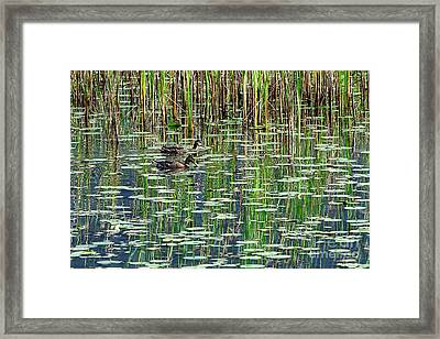 Reflections On Duck Pond Framed Print