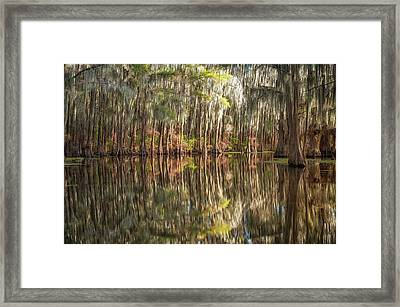 Reflections On The Bayou Framed Print