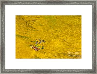 Reflections On Trout Creek Framed Print by Greg Vaughn - Printscapes