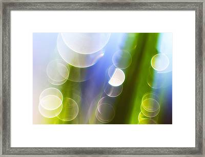 Reflections Framed Print by Silke Magino