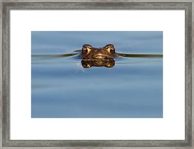 Reflections - Toad In A Lake Framed Print by Roeselien Raimond
