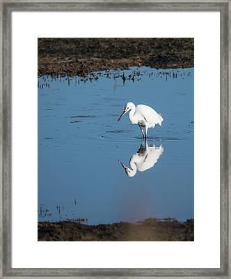 Reflections White Egret Framed Print