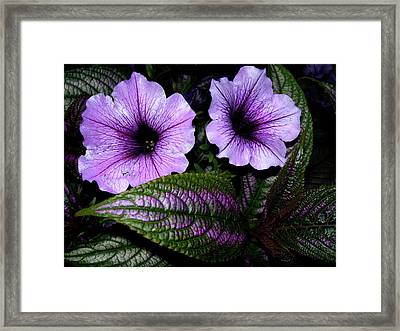 Reflective Infusion Framed Print by Randy Rosenberger