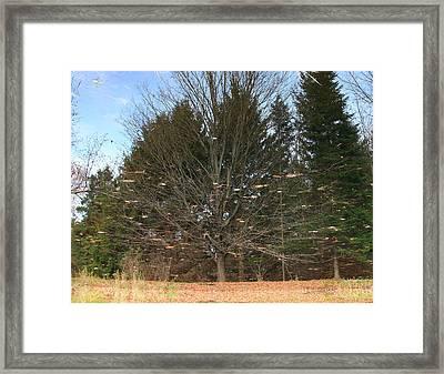 Reflective Landscape Framed Print by Larry Federman