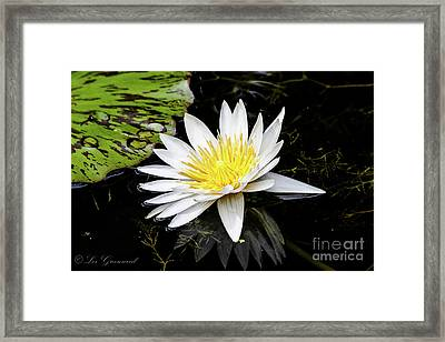 Reflective Lily Framed Print