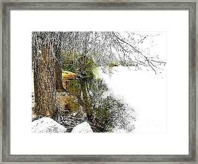 Reflective Trees Framed Print by Deborah Nakano
