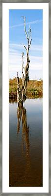 Reflexion Branch Framed Print by Fanny Diaz