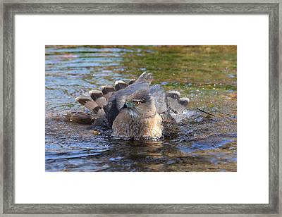 Framed Print featuring the photograph Refreshing Bath by Doris Potter