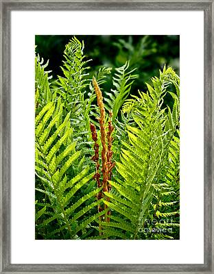 Refreshing Fern In The Woodland Garden Framed Print by Carol F Austin