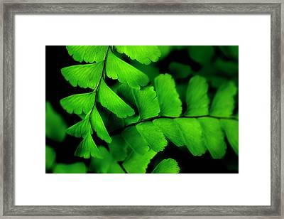 Refreshing Framed Print by Mike Eingle