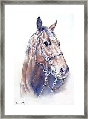 Regal  A Cavalry Horse Portrait Framed Print by Barbara Widmann