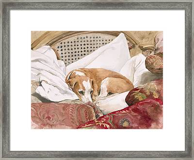Regal Beagle Framed Print by Debra Jones