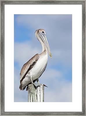Regal Bird Framed Print