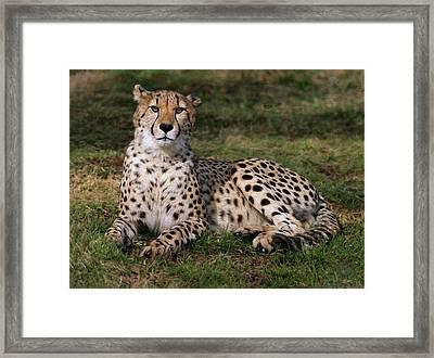 Regal Pose Framed Print