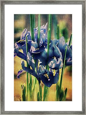 Framed Print featuring the photograph Regal Splendour  by Connie Handscomb