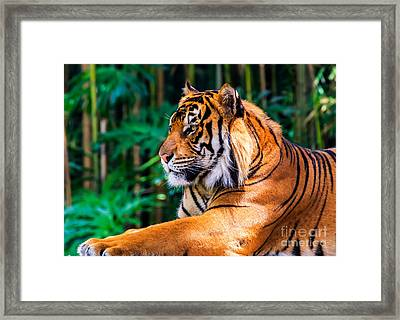 Regal Tiger Framed Print