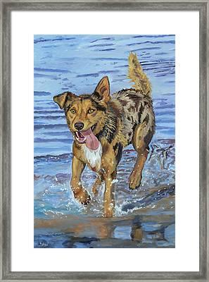 Reggie Portrait Of A Working Dog Framed Print by Kellie Straw