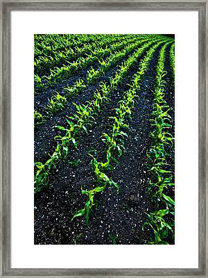 Regimented Corn Framed Print by Meirion Matthias