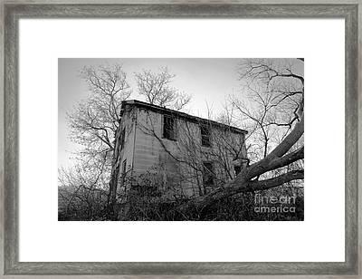 Regrowth Framed Print by Amanda Barcon