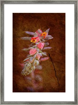Regrowth Framed Print by Holly Kempe
