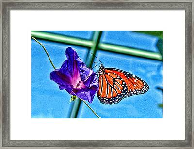 Reigning Monarch Framed Print