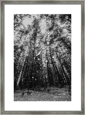 Reigning Pines Framed Print