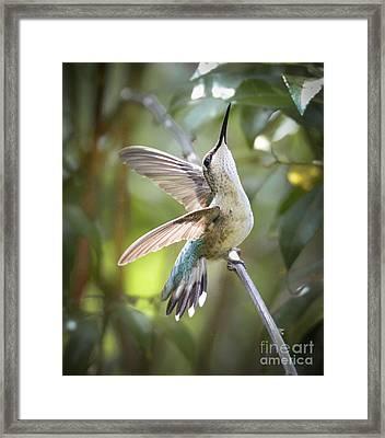 Rejoice Framed Print by Amy Porter