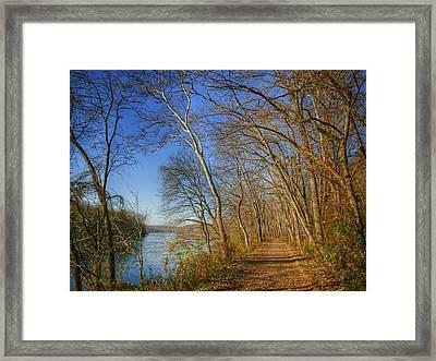 Rejuvenate  Framed Print