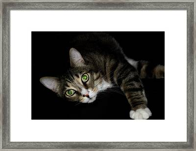 Relaxation Framed Print by Mike Eingle