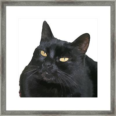 Relaxed Black Cat Portrait Vector Isolated Framed Print by Tracey Harrington-Simpson